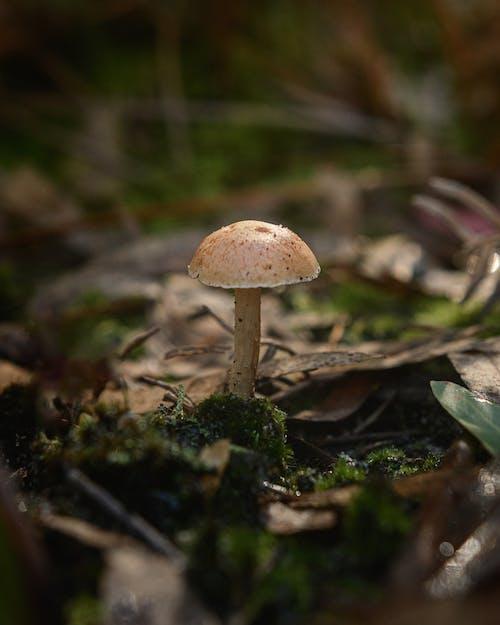 Close-Up Shot of a Forest Mushroom