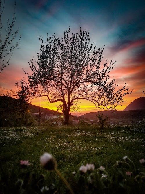 Free stock photo of apple tree, beautiful sky, beauty of nature