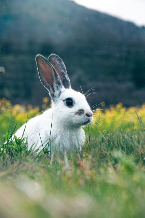 Close-Up Shot of a White Rabbit in the Grass