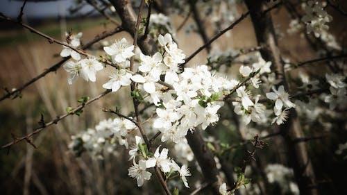 Free stock photo of cinco de mayo, countryside, flower petals
