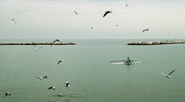 Fisherman Riding Boat in the Middle of Ocean With Flock of Gulls at Daytime