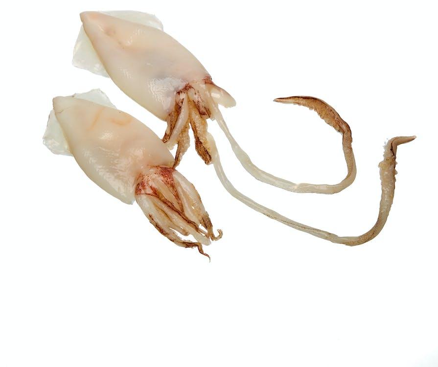 italienisches essen, tintenfisch