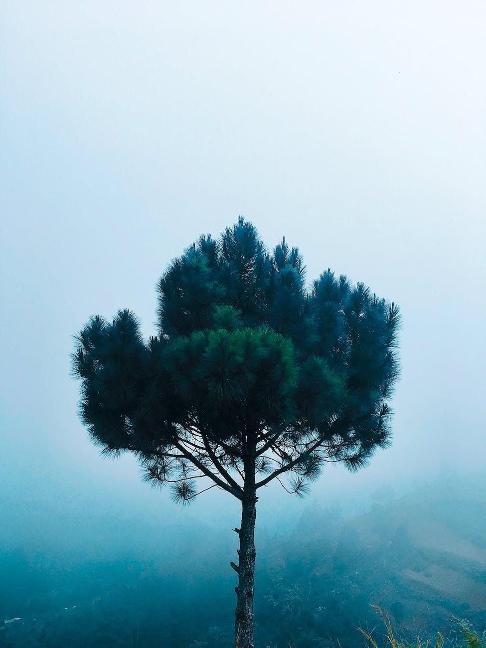 dream of a tree