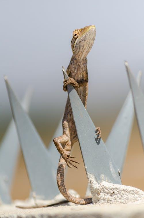 Ilmainen kuvapankkikuva tunnisteilla aavemainen, aavikko, aita