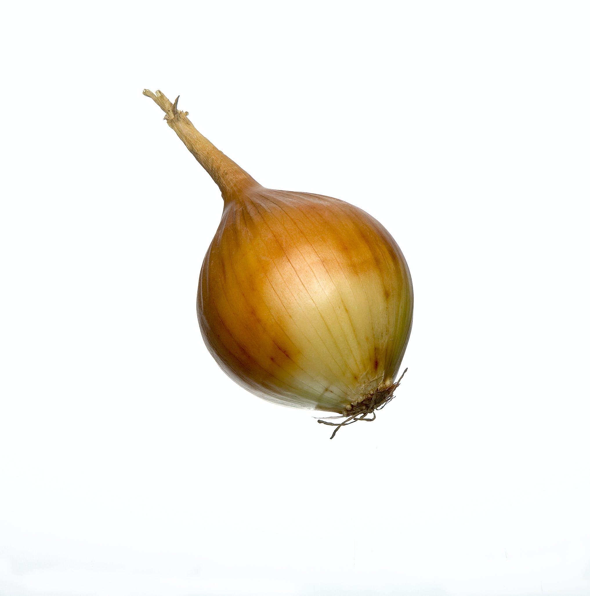 Free stock photo of onion