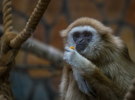 Free stock photo of animals, monkeys