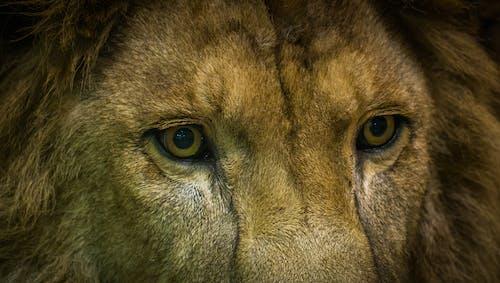 Immagine gratuita di animale, animale selvatico, cacciatore, fauna selvatica