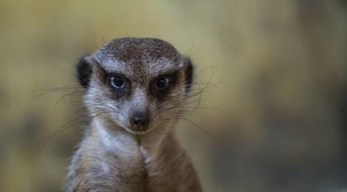 Gratis lagerfoto af close-up, dybde, dyr, dyreliv