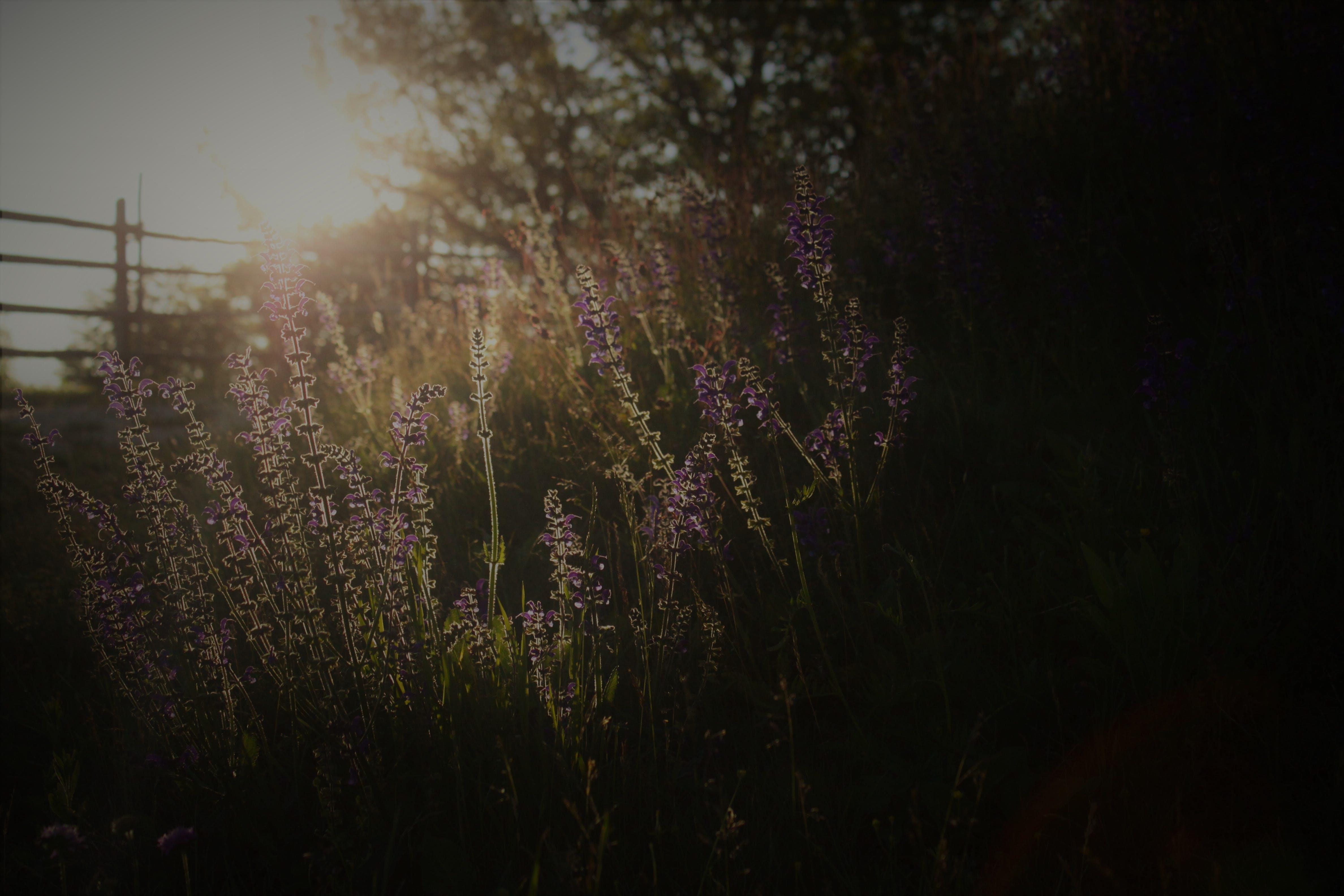 คลังภาพถ่ายฟรี ของ กั้นรั้ว, ดวงอาทิตย์, ดอกไม้, ดอกไม้ป่า