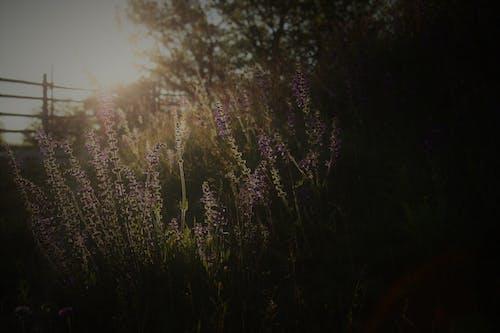 경치, 경치가 좋은, 꽃, 나무의 무료 스톡 사진