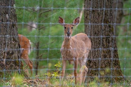 Fotos de stock gratuitas de adular, al aire libre, animal