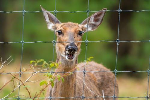 Fotos de stock gratuitas de al aire libre, animal, cabeza
