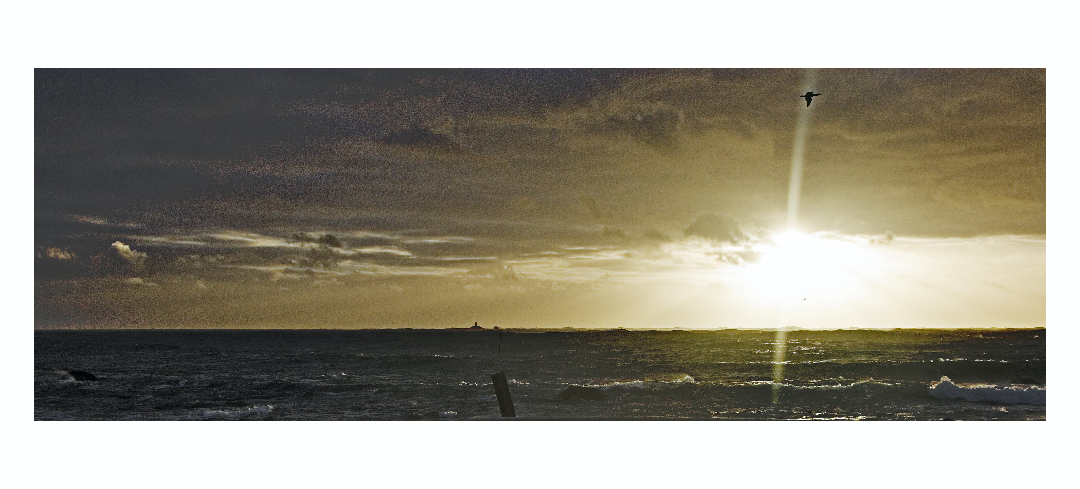 Free stock photo of by the sea, dramatic sky, seabird