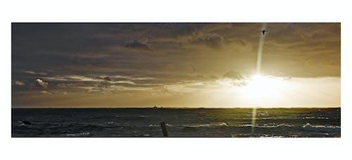 Δωρεάν στοκ φωτογραφιών με δίπλα στη θάλασσα, δραματικός ουρανό, θαλάσσιο πουλί