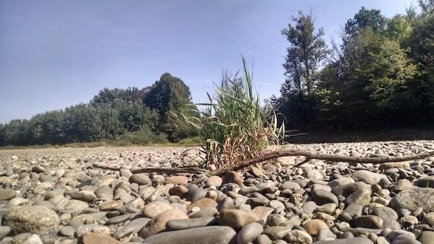 Free stock photo of summer, rocks, bush, plant