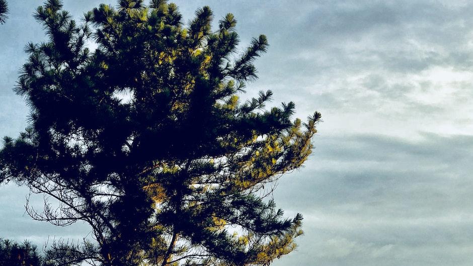 Black Tree Under Gray Clouds Photo