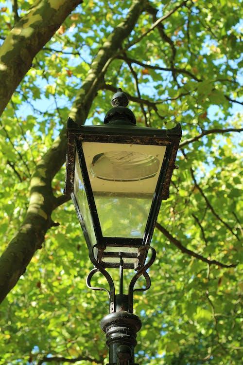 Free stock photo of light, park, street lamp, street light