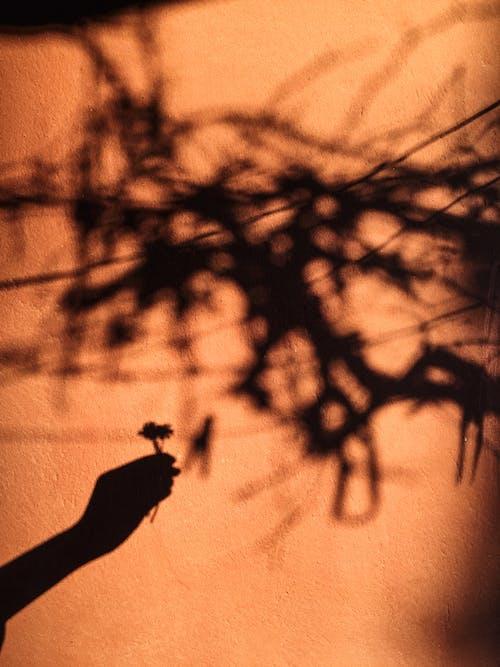 Základová fotografie zdarma na téma anonymní, barva, část těla