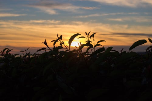 Silhouette Photography Of Plant During Golden Hour