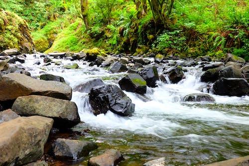 Ảnh lưu trữ miễn phí về con đường tự nhiên, đá, màu xanh lá, suối