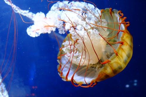 Ảnh lưu trữ miễn phí về biển sâu, đại dương, đại dương sâu thẳm, sinh vật biển