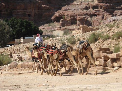Ảnh lưu trữ miễn phí về đá, đường mòn, lạc đà, núi