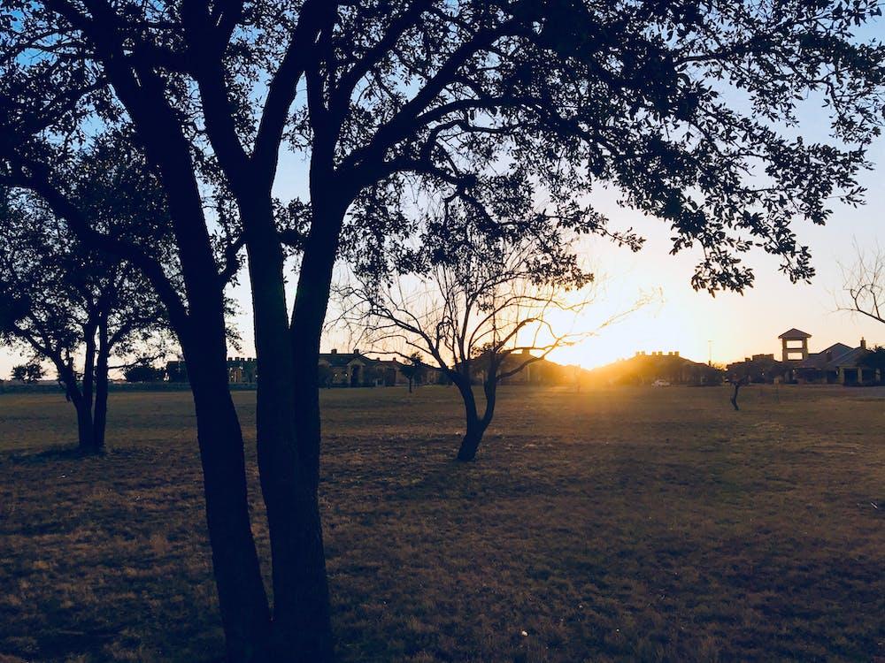 Green Grass Field during Sun Set