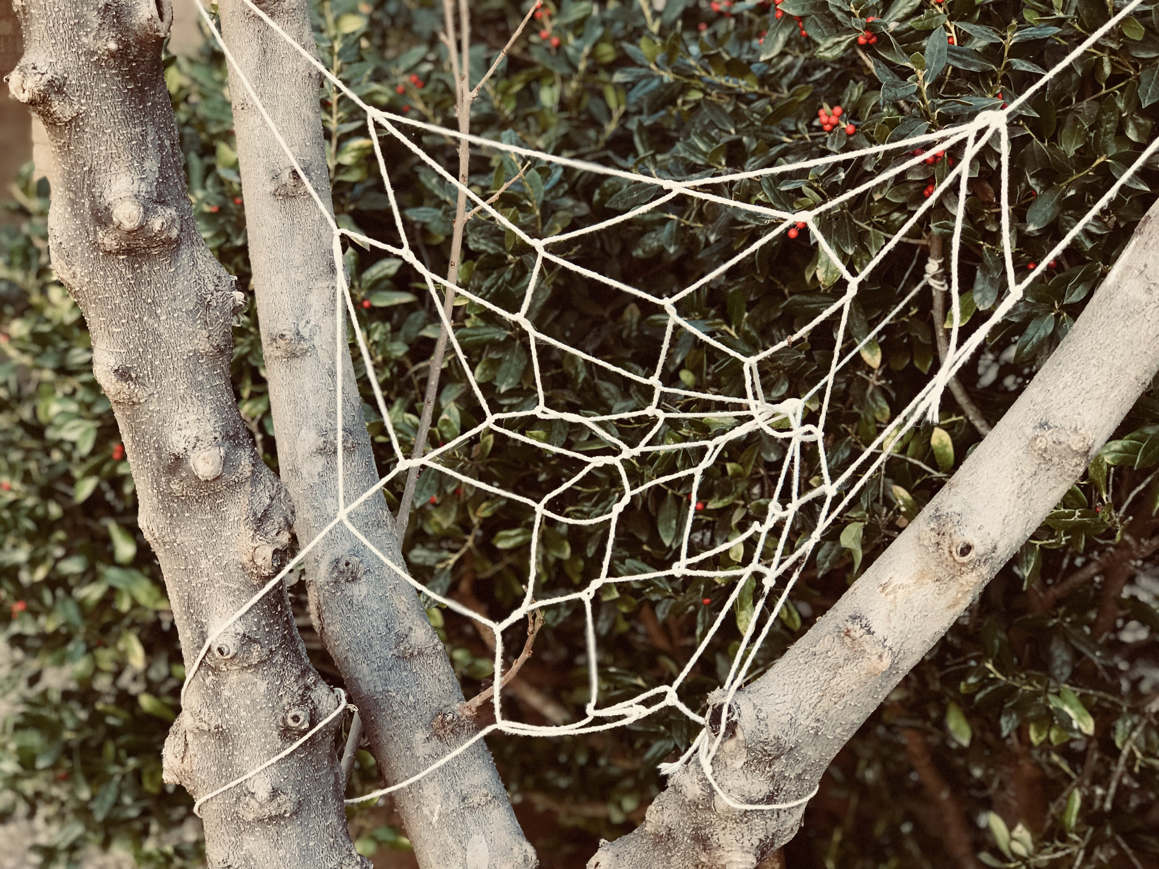 White Knitted Web on Tree