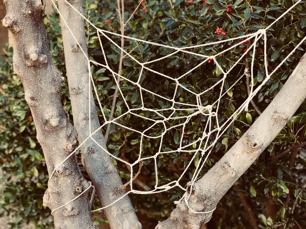abbaiare, albero, ambiente