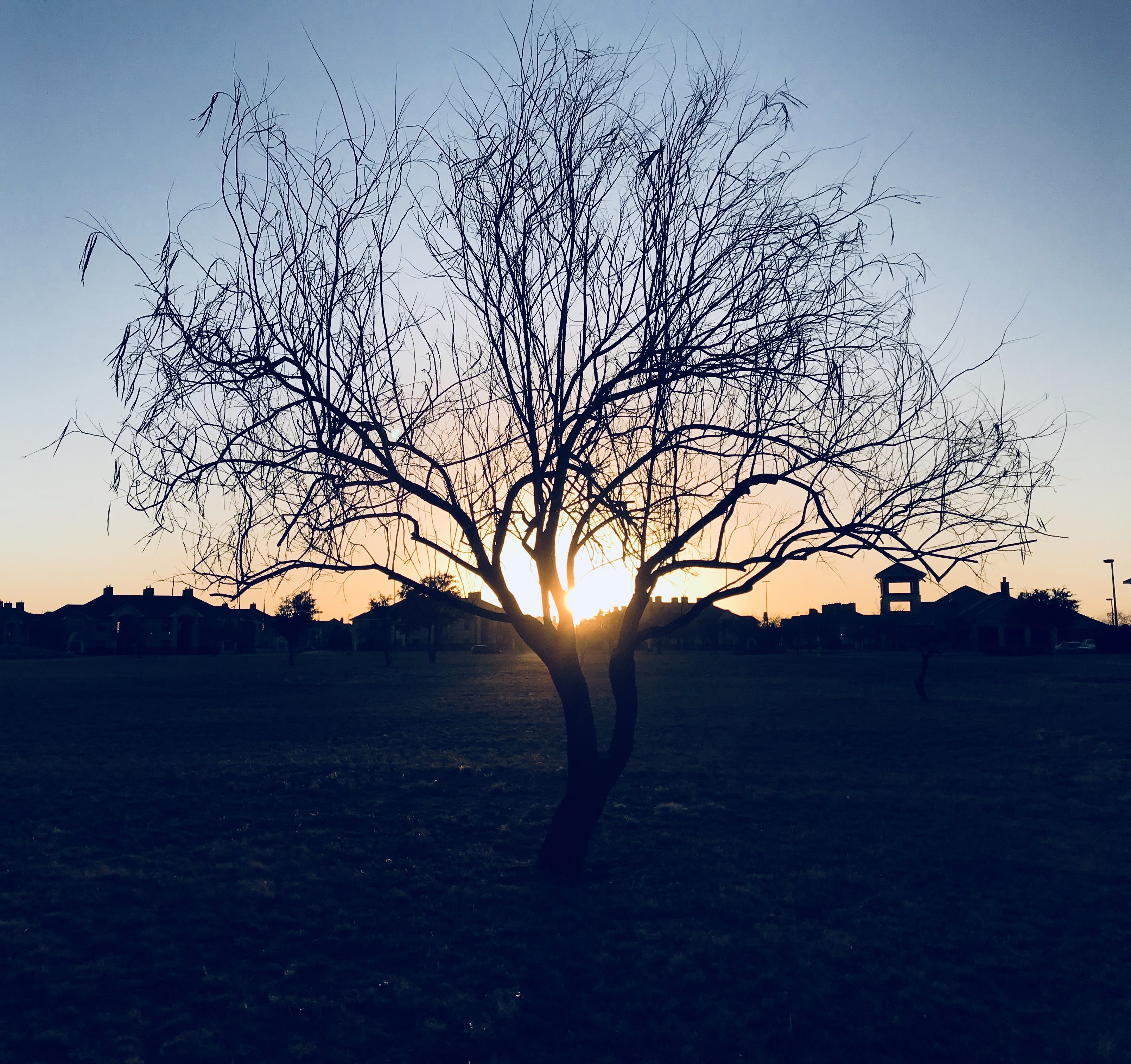 Silhouette of Bare Tree during Sunset