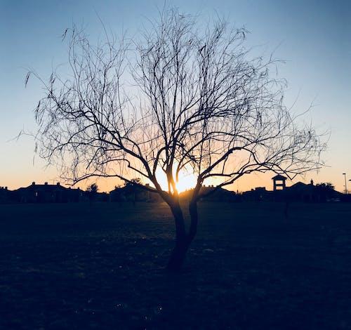 Ảnh lưu trữ miễn phí về ánh sáng mặt trời, bầu trời, cây, chi nhánh