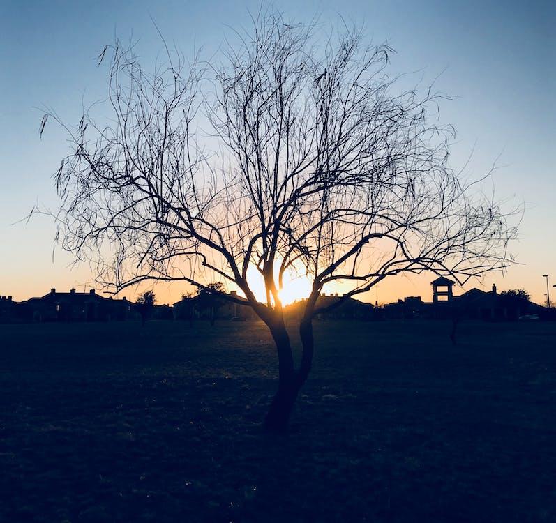 alam, backlit, cabang