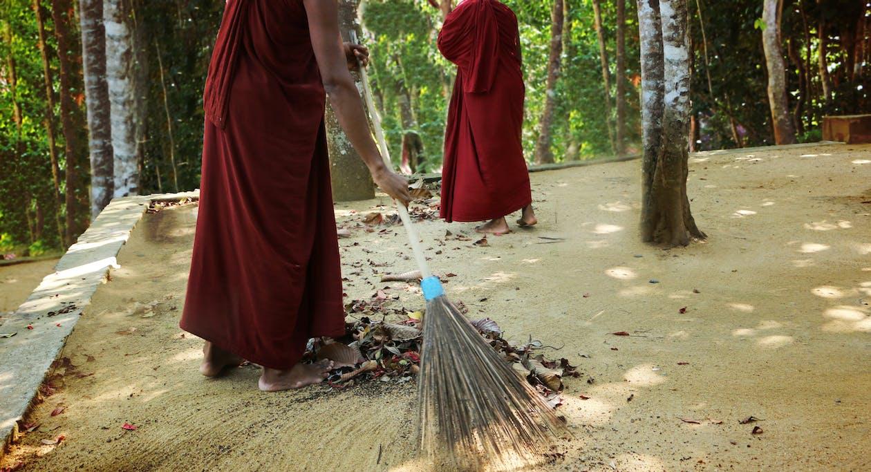 árvore, bhikkhu, bodhi