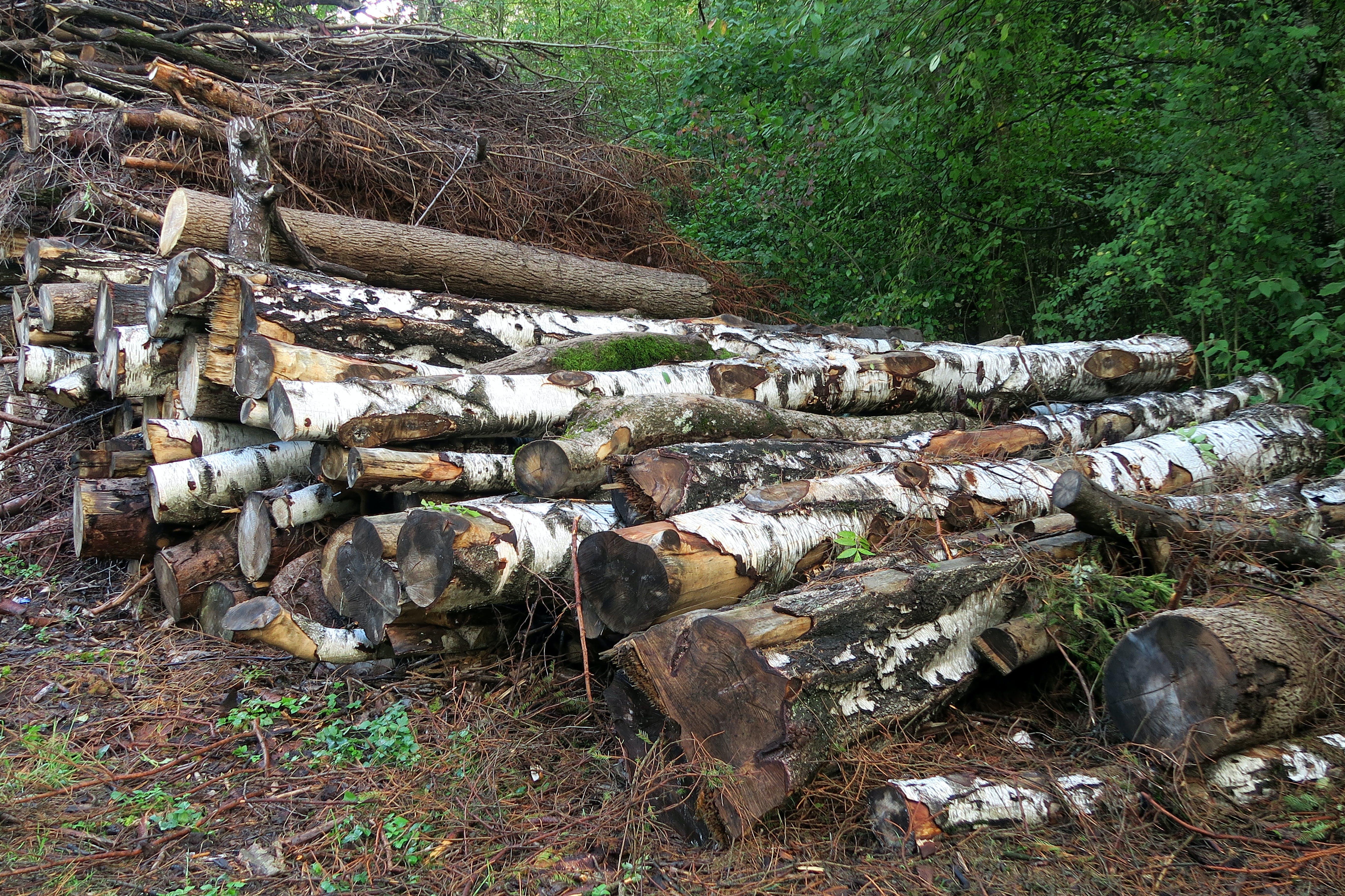 Free stock photo of landscape, logs, woodland