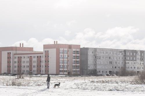 シティ, 冬, 冬の風景, 歩くの無料の写真素材