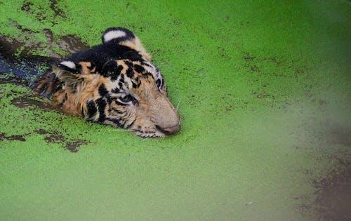 คลังภาพถ่ายฟรี ของ การถ่ายภาพสัตว์ป่า, ดุร้าย, ที่ลุ่มน้ำขัง, ธรรมชาติ