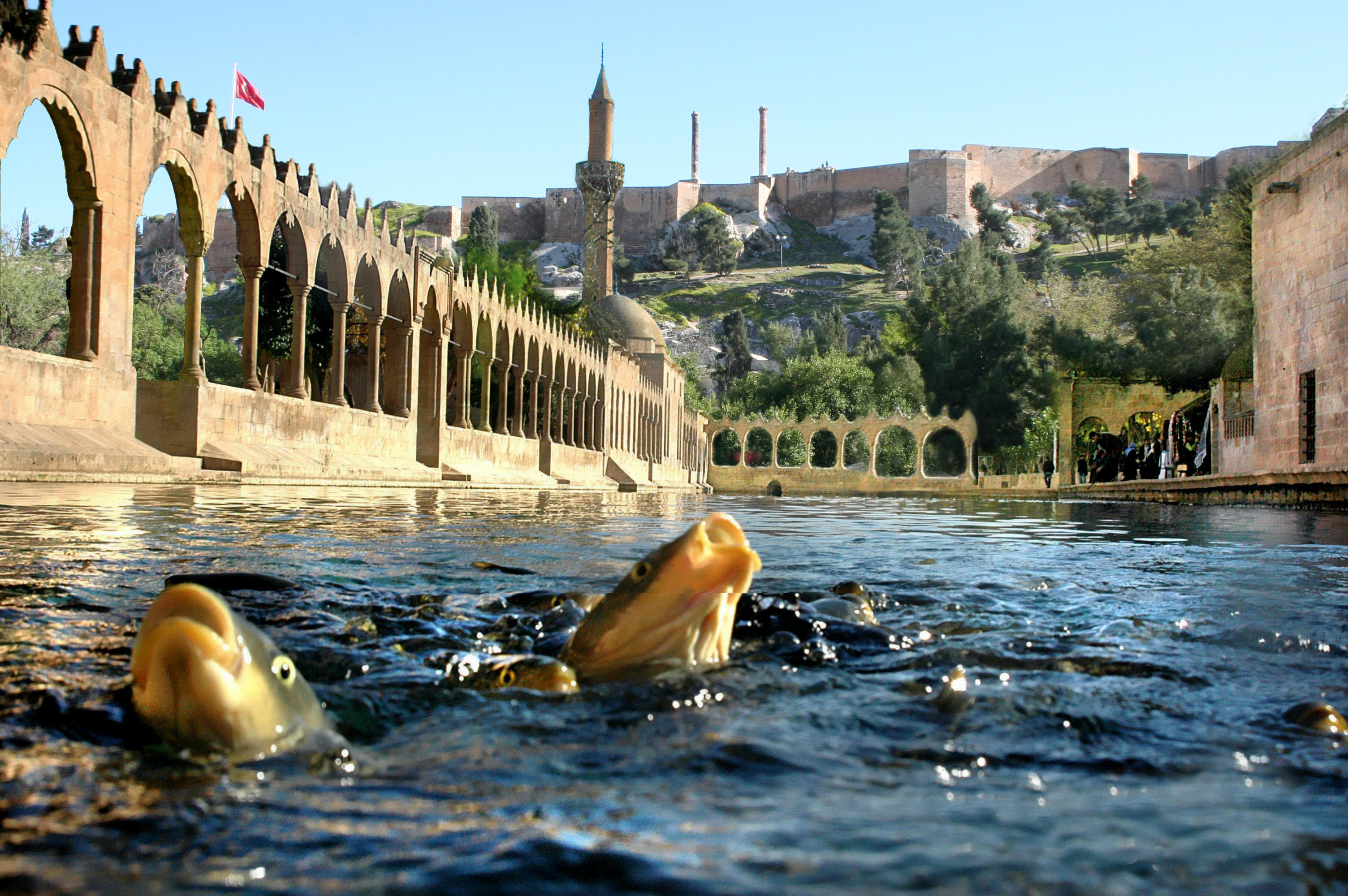 Free stock photo of Şanlıurfa, Balık, Balıklıgöl, cami
