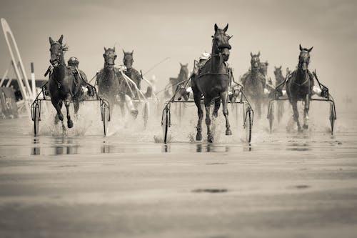 Ilmainen kuvapankkikuva tunnisteilla hevonen, hevoset, ihmiset, istuva