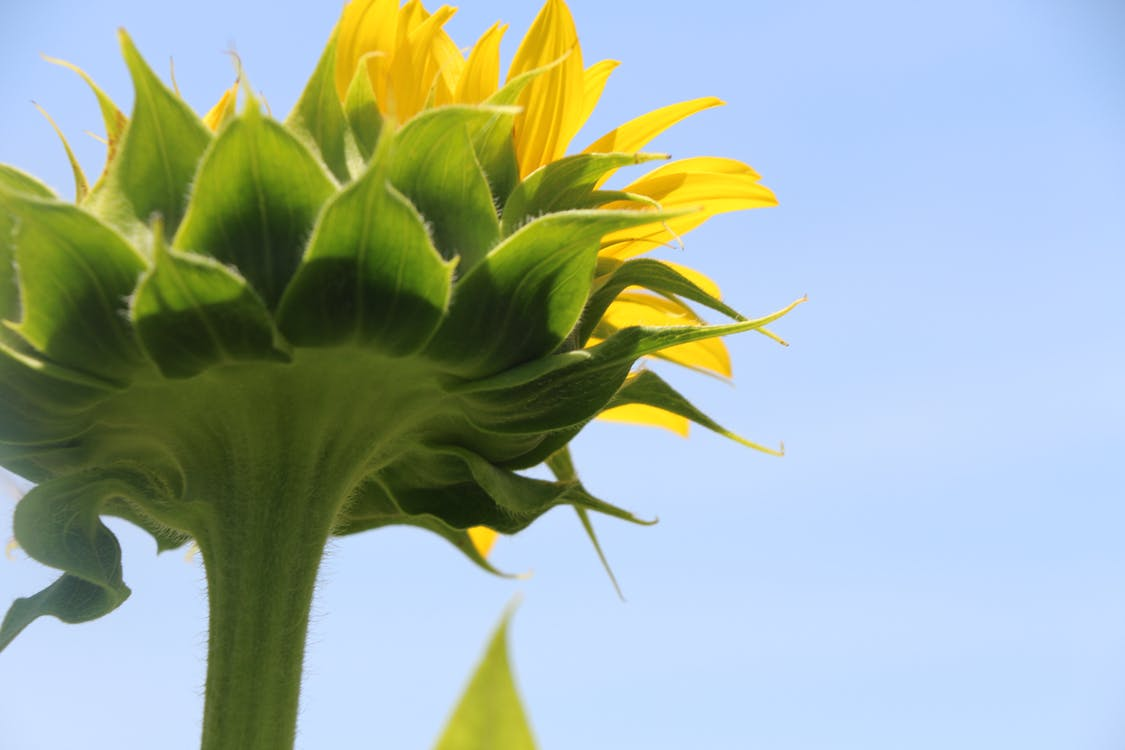 beautiful, day, flower