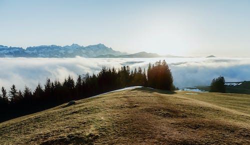 Foto d'estoc gratuïta de arbres, cel, constipat, herba