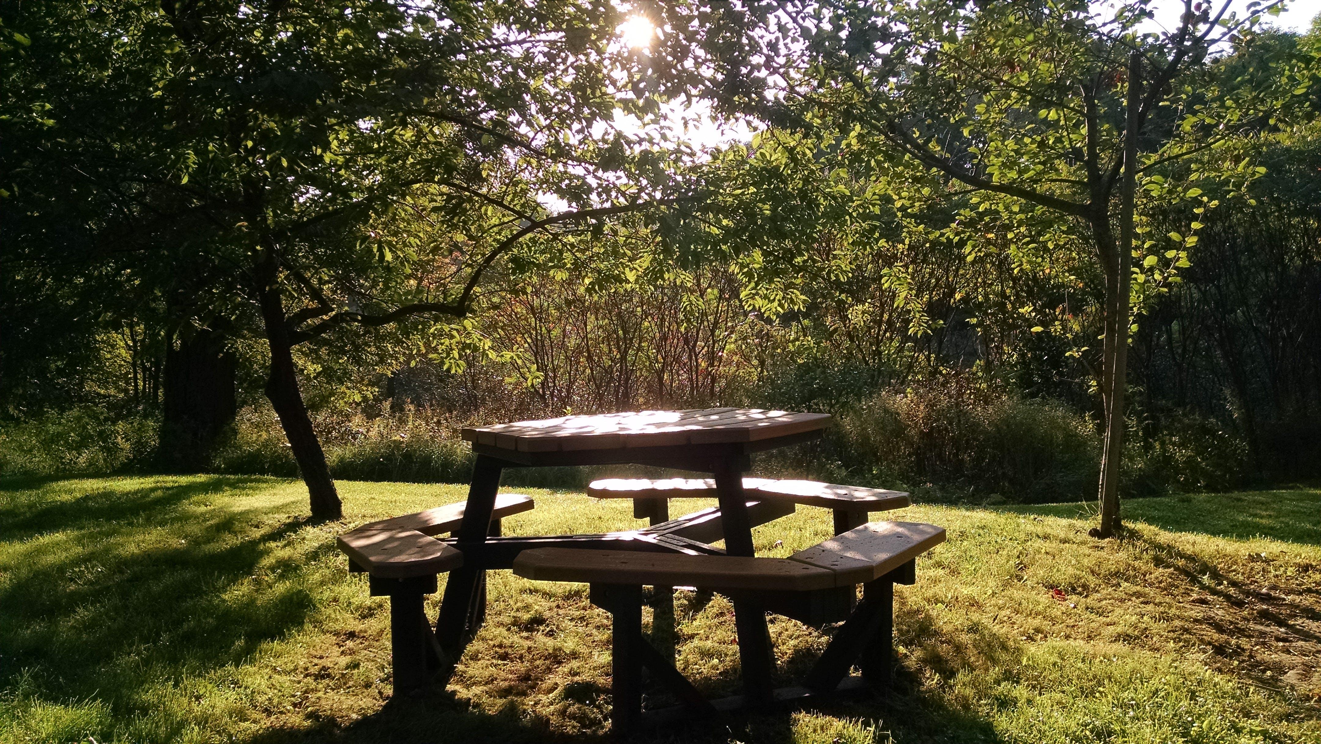 Free stock photo of sunshine, table