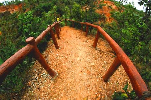 길, 산, 숲, 식물의 무료 스톡 사진