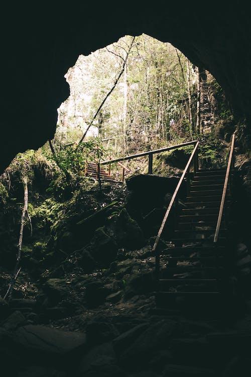 Darmowe zdjęcie z galerii z ciemny, drzewa, jaskinia, kamienie