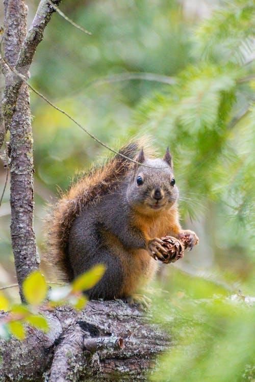 動物, 動物攝影, 哺乳動物 的 免費圖庫相片