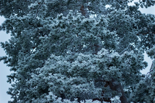 Green Leaf Tree Covered in Snow