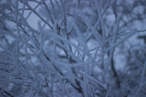 Free stock photo of frozen, snow, texture, tree branches