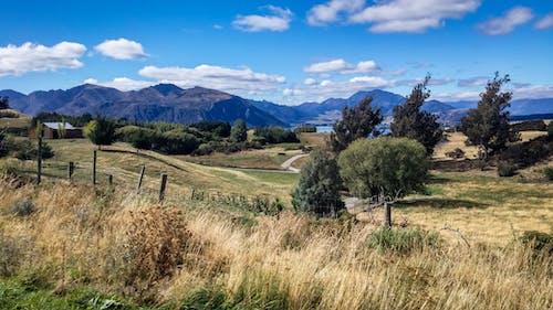 ağaçlar, alan, çim, dağ içeren Ücretsiz stok fotoğraf