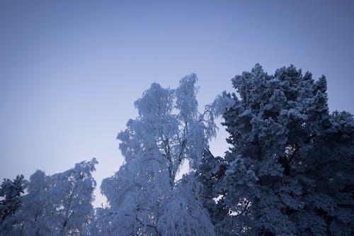 Gratis arkivbilde med årstid, blå himmel, forkjølelse, natur