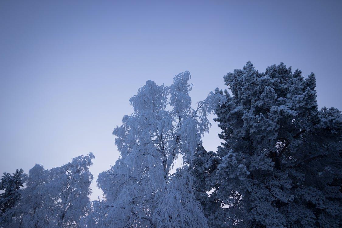 årstid, blå himmel, forkjølelse
