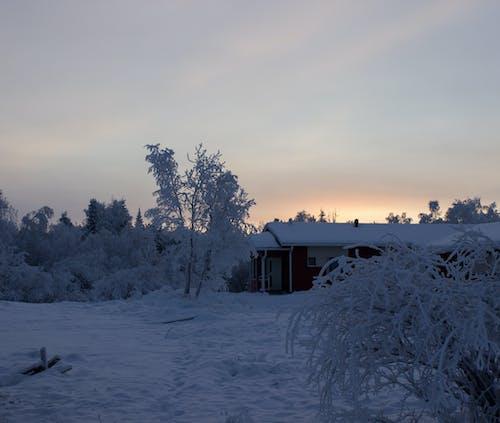 Gratis arkivbilde med lappland, snø, solnedgang, vinter